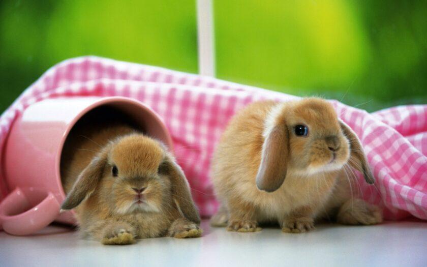 hình nền win 10 đẹp về hai chú thỏ dễ thương