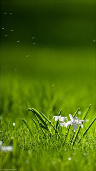 hình nền zalo cỏ xanh và thiên nhiên