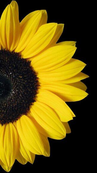 hình nền zalo đẹp về một bông hoa vàng