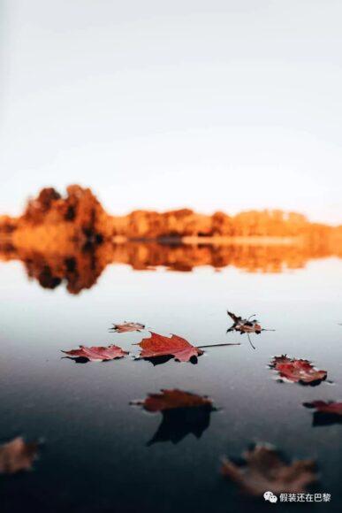 tải hình ảnh mùa thu