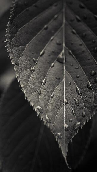 tải hình nền lá cây