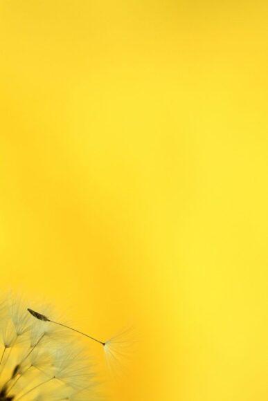 tải hình nền màu vàng đẹp