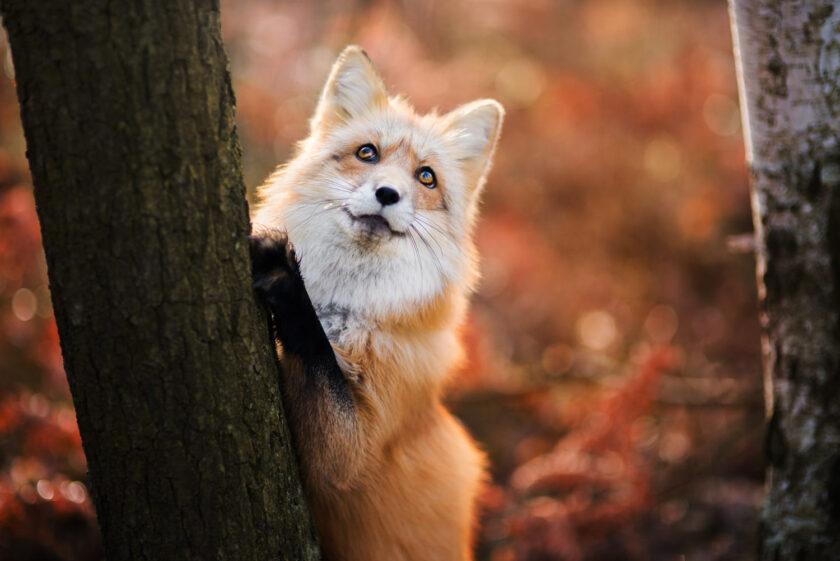 tổng hợp hình ảnh động vật dễ thương
