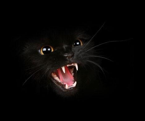 ảnh đại diện mèo đen trong đêm nhe nanh cực đẹp