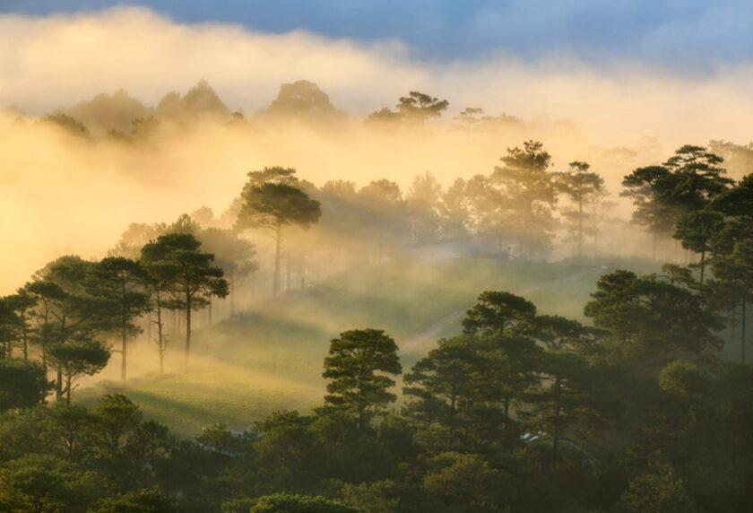 hình ảnh đà lạt chìm trong sương