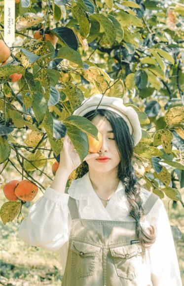 hình ảnh đà lạt thu hoạch vườn hồng