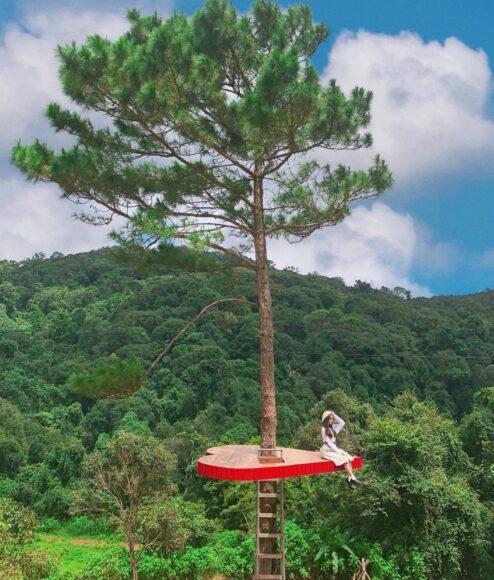 hình ảnh đà lạt với cây cô đơn