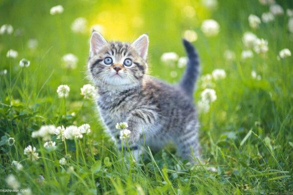 hình ảnh động vật dễ thương