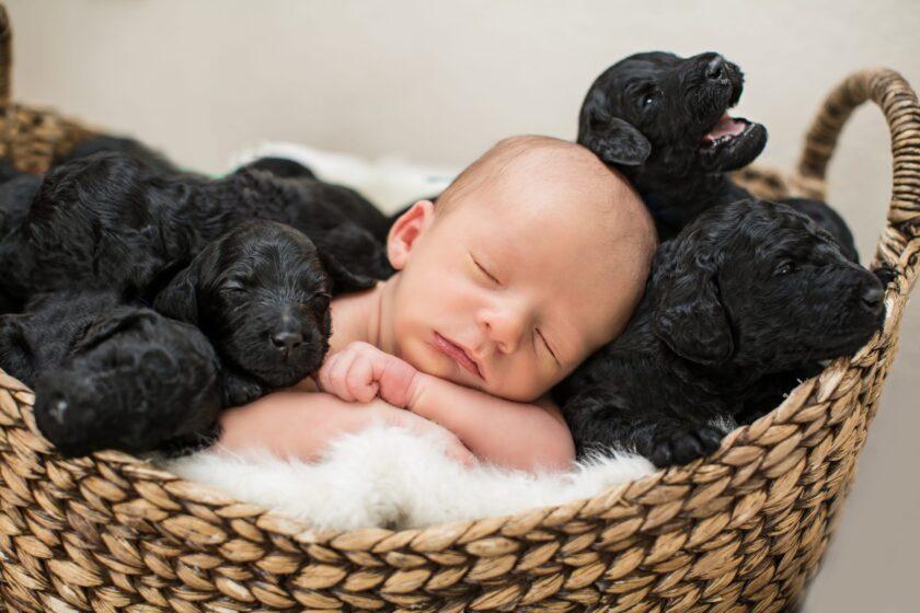 hình ảnh em bé sơ sinh dễ thương với bé cún