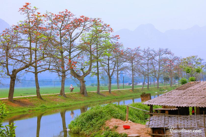 hình ảnh làng quê việt nam đầy hoa gạo