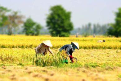 hình ảnh làng quê việt nam đẹp