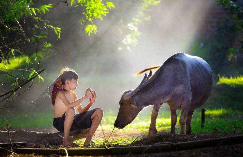 hình ảnh làng quê việt nam gắn với tuổi thơ