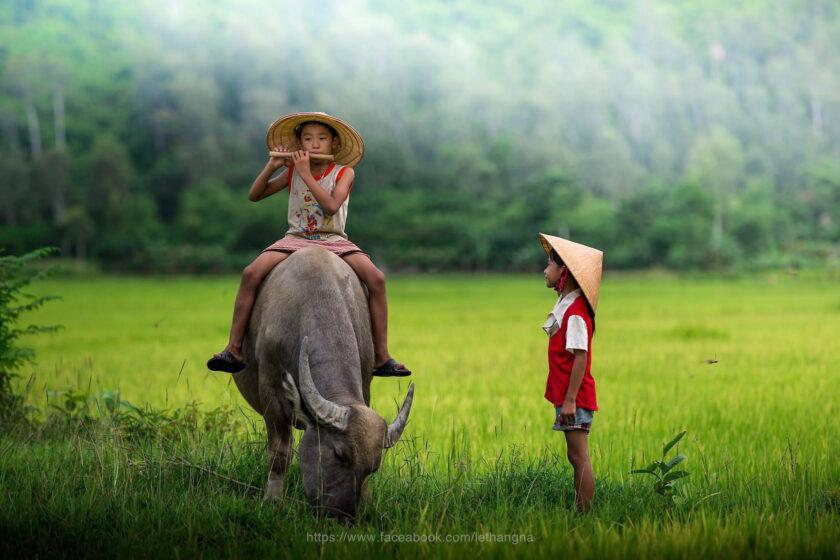 hình ảnh làng quê việt nam ngập tràn kí ức tuổi thơ