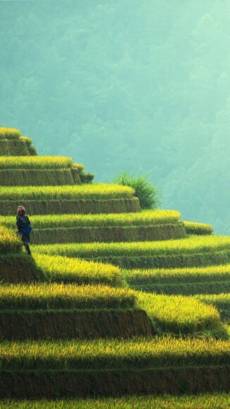 hình ảnh làng quê việt nam thanh tịnh