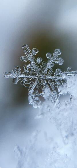 Hình ảnh mùa đông lạnh được thể hiện qua hoa tuyết