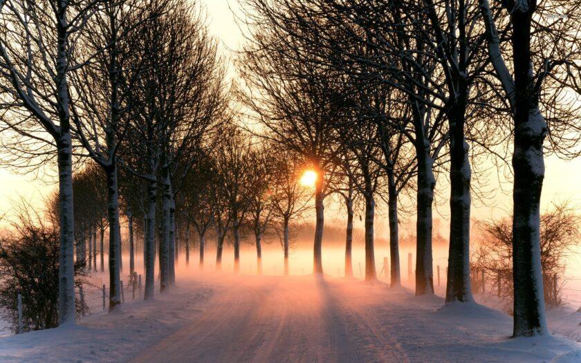 Hình ảnh mùa đông lạnh dưới ánh mặt trời soi rọi trên con đường
