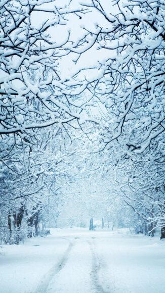 Hình ảnh mùa đông lạnh giữa con đường và rừng cây