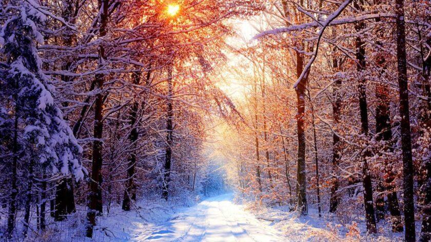 Hình ảnh mùa đông lạnh giữa khu rừng đầy tuyết