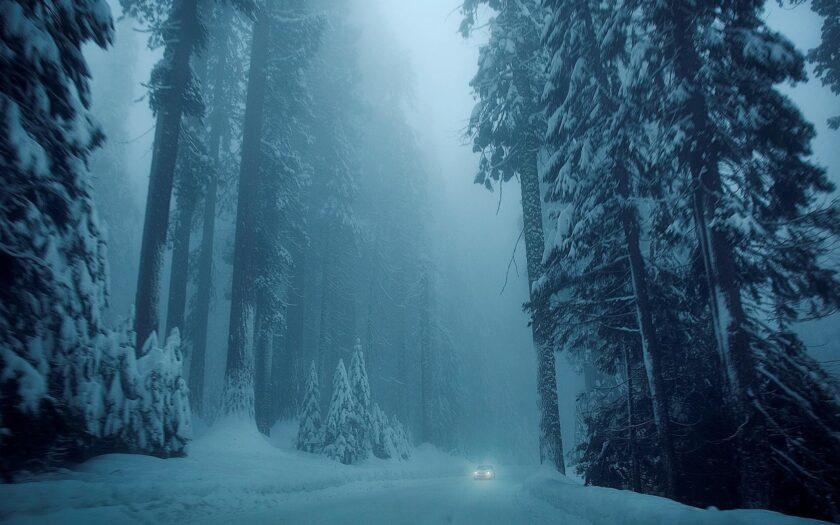 Hình ảnh mùa đông lạnh giữa rừng tuyết tùng hùng vĩ
