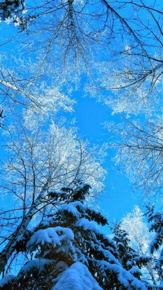 Hình ảnh mùa đông lạnh nhìn từ chân núi
