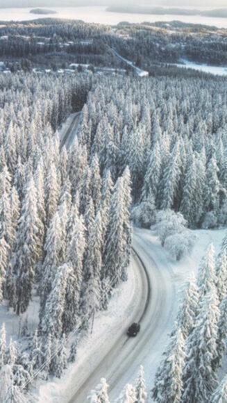 Hình ảnh mùa đông lạnh trên con đường xuyên rừng
