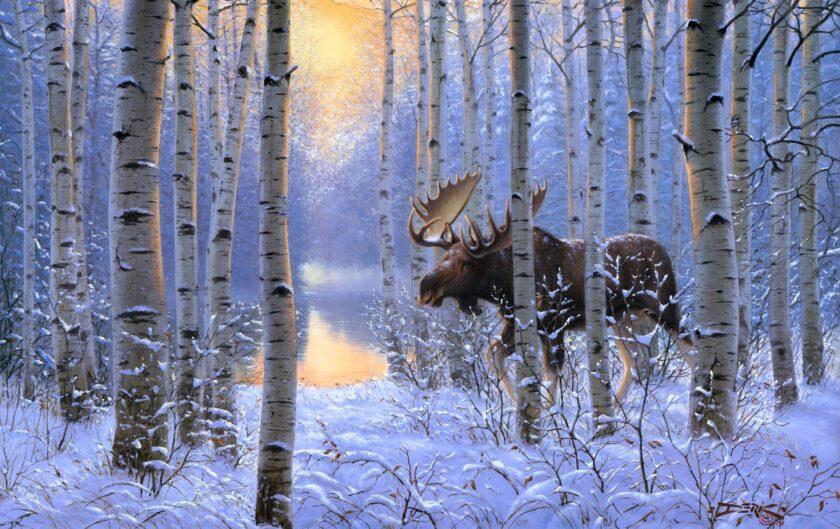 Hình ảnh mùa đông lạnh với chú nai sừng tấm ở bắc Âu
