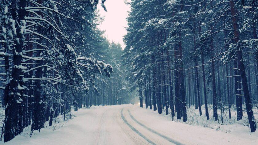Hình ảnh mùa đông lạnh với con đường vắng vẻ giữa rừng