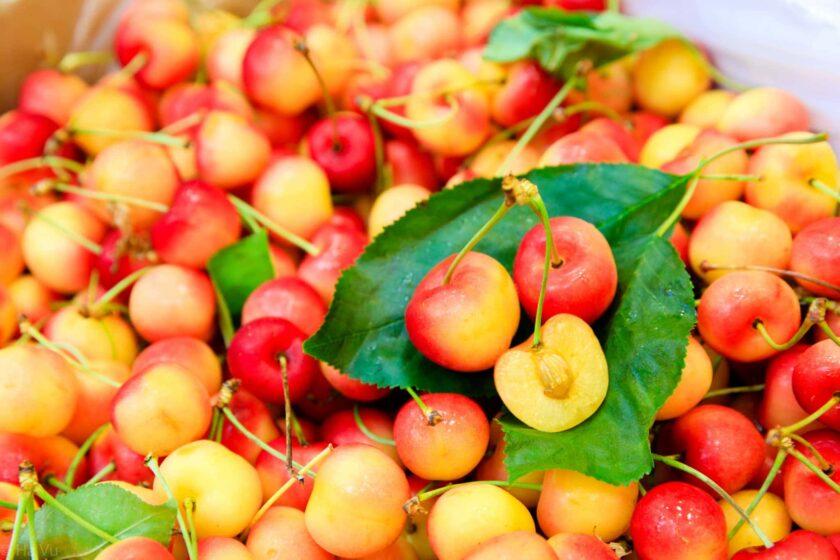 Hình ảnh quả cherry vàng và đỏ mới thu hoạch