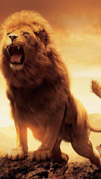 Hình ảnh sư tử đang gầm dũng mãnh