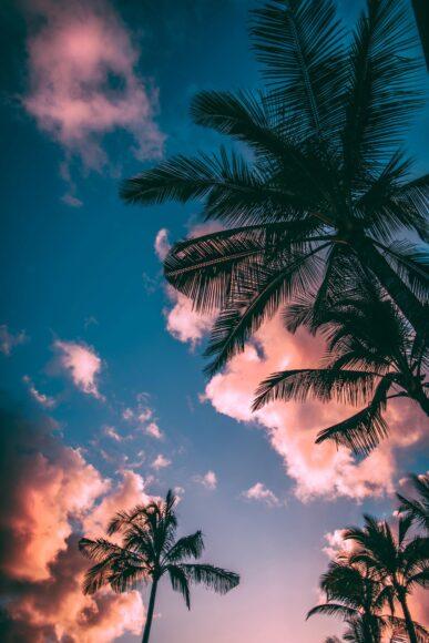 hình nền 4k cho điện thoại về hàng dừa và bầu trời xanh
