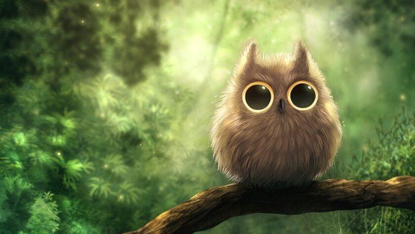 hình ảnh chim cú mèo 3d đẹp