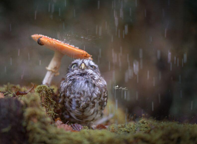 hình ảnh chim cú mèo ngộ nghĩnh đáng yêu
