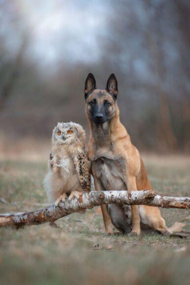 hình ảnh chim cú mèo và bạn thân thiết
