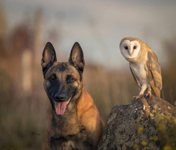 hình ảnh chim cú mèo và chó thân thiết