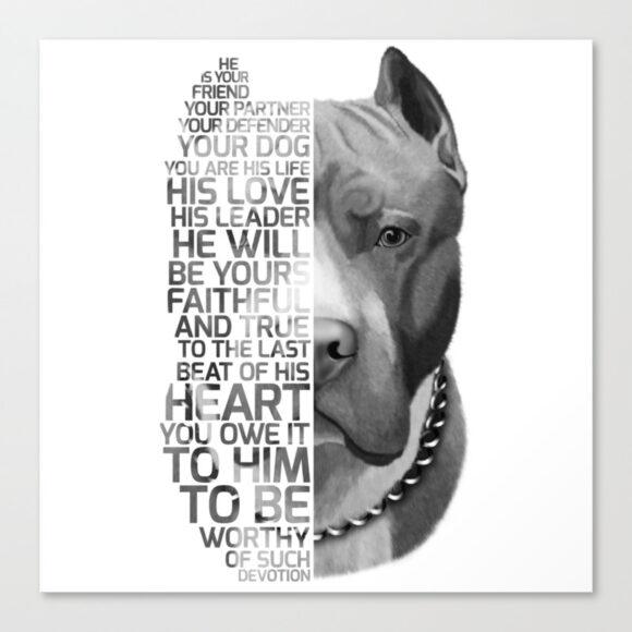 hình ảnh chó pitbull đẹp chất nhất
