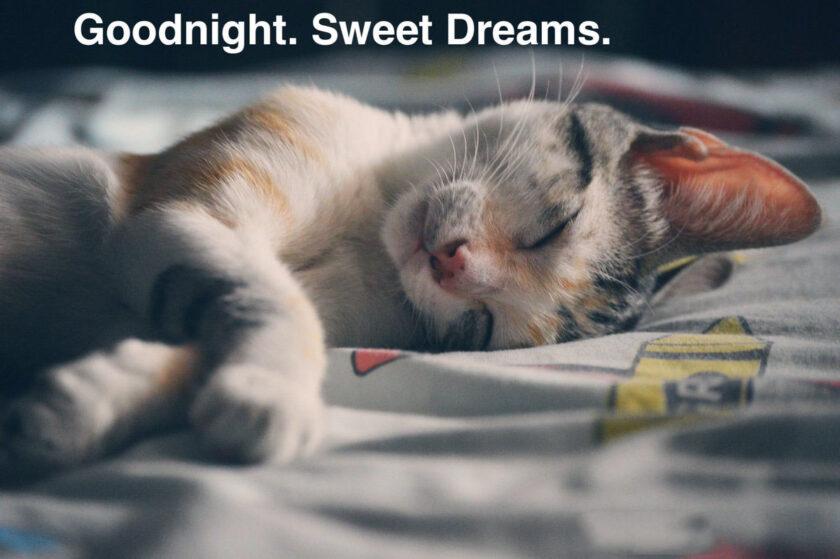hình ảnh chúc ngủ ngon kute của mèo con
