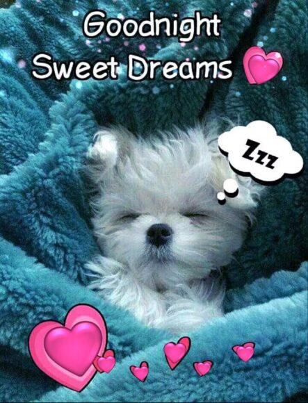 hình ảnh chúc ngủ ngon kute cún con đáng iu