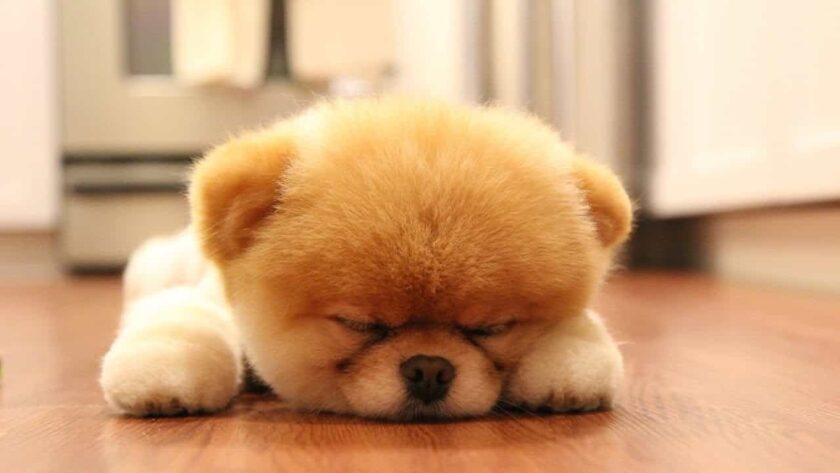 hình ảnh chúc ngủ ngon kute cún con say ngủ