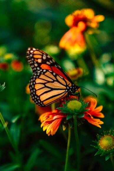 hình ảnh con bướm đẹp chân thực nhất