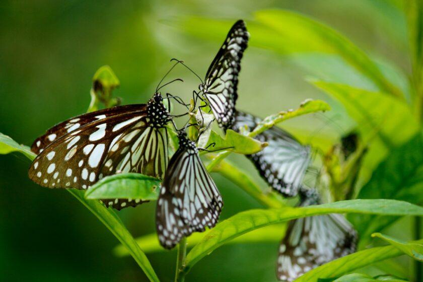 hình ảnh con bướm đẹp đậu thành đàn