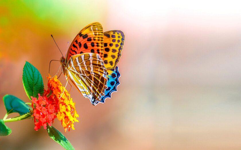hình ảnh con bướm đẹp đậu trên bông hoa