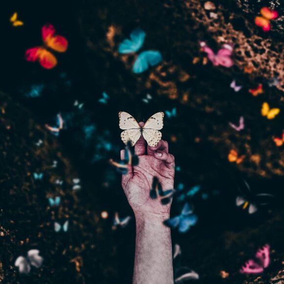 hình ảnh con bướm đẹp đậu trên tay