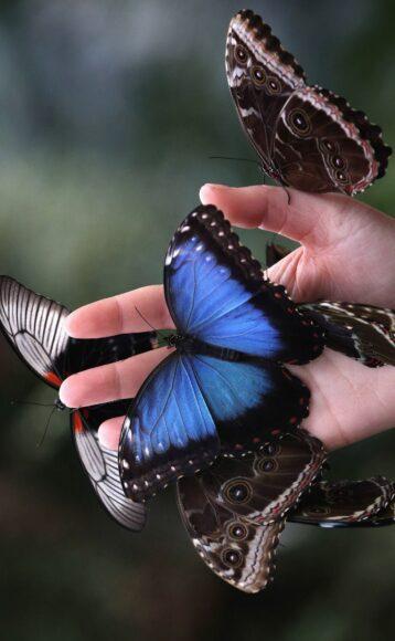 hình ảnh con bướm đẹp màu xanh