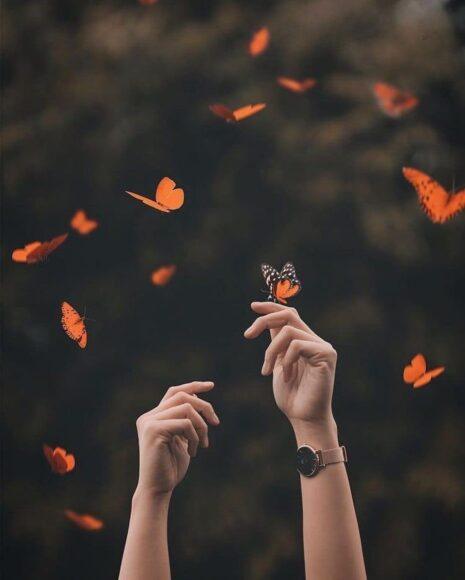 hình ảnh con bướm đẹp mê mẩn