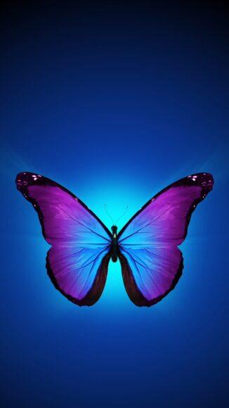 hình ảnh con bướm đẹp phong cách tối giản