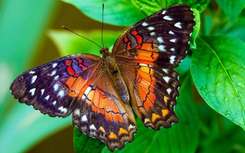 hình ảnh con bướm đẹp sặc sỡ
