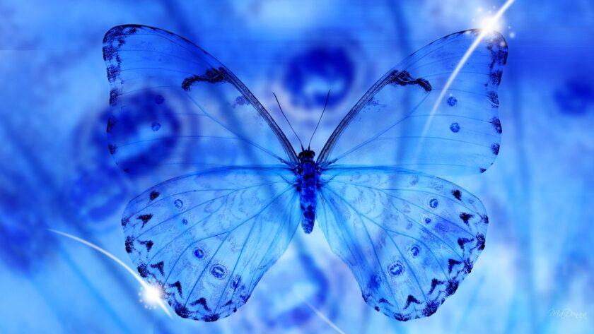 hình ảnh con bướm đẹp trong suốt ma mị