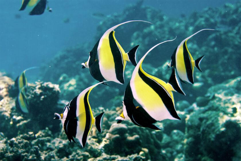hình ảnh con cá bơi theo đàn