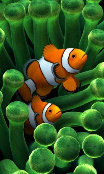 hình ảnh con cá đẹp dưới đáy đại dương