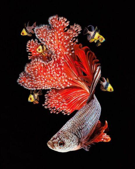hình ảnh con cá đẹp lộng lẫy